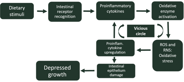 Figure 1. Feed-induced inflammation / oxidative stress vicious circle