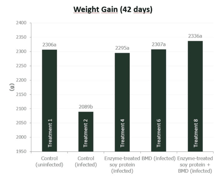 Figure 5a. Effect of feeding enzyme-treated protein (HP AviStart) in the starter feed and/or AGP (BMD) during the entire cycle on body weight and FCR of infected broiler chickens (0-42 days). Data with different subscripts are significantly different (P<0.05). Source: Rasmussen et al., 2019.