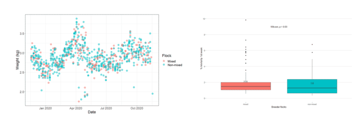With a simple scatterplot (left) we can tell that slaughter weight is not affected by mixing breeder flocks throughout the production year. However, early mortality might be increased by mixed origins (boxplot - right).
