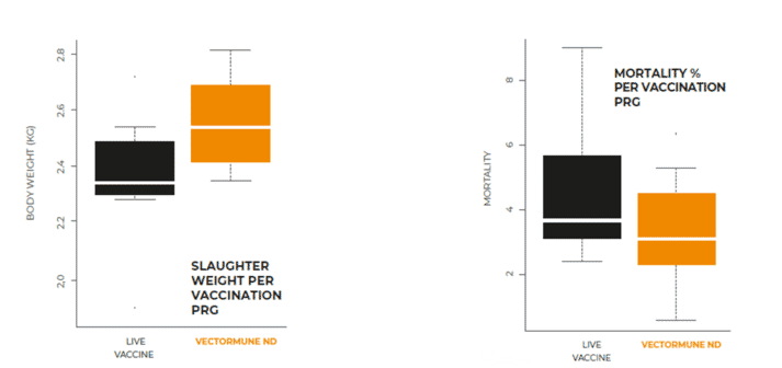 Figure 1. The economical benefits were calculated based on the production differences considering additional 250 g/ bird in slaughter body weight and 7 points lower in the feed conversion ratio with the Vectormune® ND vaccination program which translates into 142 Euros per 1,000 birds in this study.