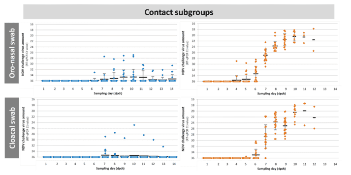 Figure 4. Kinetics of velogenic NDV shedding in vaccinated and unvaccinated birds after direct infection (seeder subgroups) or contact infection (contact subgroups). Seeder subgroups were challenged with 5.0 log10ELD50 of velogenic NDV intra-nasally. Contacts were co-mingled with seeders from 8 hours post-challenge. Oro-nasal swabs and cloacal swabs were collected daily for 14 days post-challenge; vNDV amount was quantified by RT-qPCR. Individual results and mean & STD of Ct values are shown.