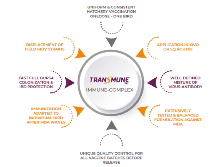 Figure 2. Benefits associated with Immune-Complex (Transmune) vaccination