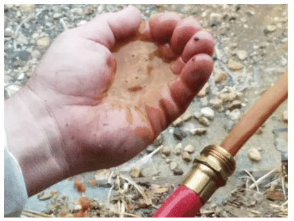 A regular flushing of water lines will remove all debris and dirt from the drinker lines. Photo courtesy of Dr. Susan Watkins, University of Arkansas, department of poultry science.