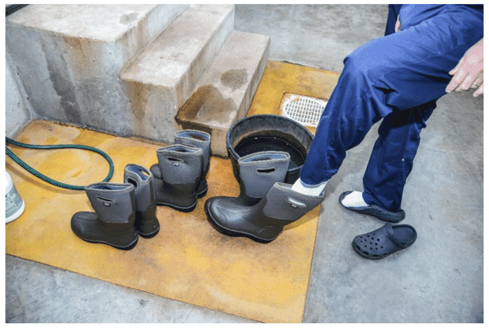 Personnel are a leading cause of contaminating a clean house. Footbaths and clean boots must be available at the entrance to every house.