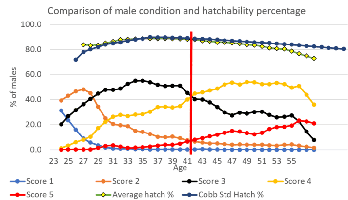 Figure 4: Hatchability and male fleshing conditions of 23 flocks and 15,000 males.