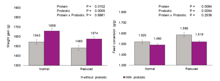 Figure 1: Performance parameters evaluated in broiler chickens fed two levels of protein with or without probiotic (B. amyloliquefaciens CECT 5940) supplementation under necrotic challenge condition.