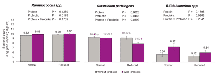 Figure 2: Cecal bacterial content of broiler chickens fed two levels of protein with or without probiotic (B. amyloliquefaciens CECT 5940) under necrotic enteritis condition.