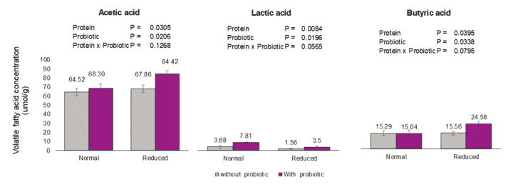 Figure 3: Volatile fatty acid content of broiler chickens fed two levels of protein with or without probiotic (B. amyloliquefaciens CECT 5940) under necrotic enteritis challenge.