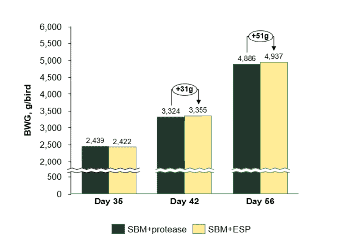 Figure 2 Body weight gain (BWG; kg/bird) of broiler chickens fed enzyme-treated soy protein (ESP) day 0-14 compared to exogenous protease fed day 0-56 (SBM+protease).