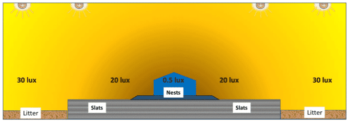 Figure 18. Light intensity should be highest over litter and slats, and lower near the nests