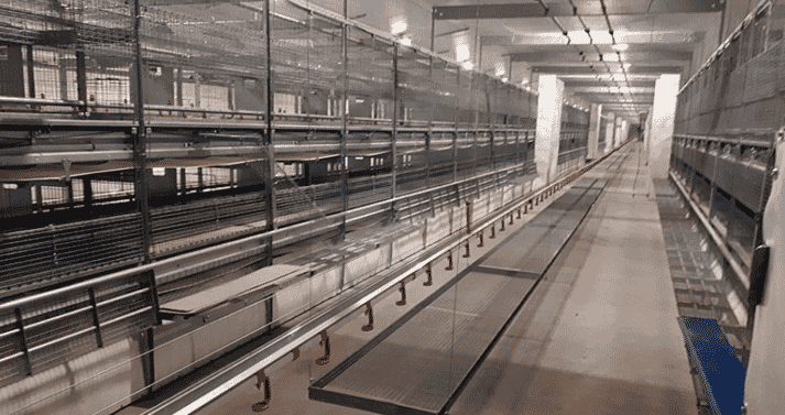 Natura Primus aviary for pullet rearing shortly before the first birds are moved in