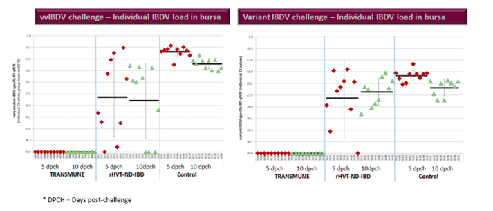 Figure 2. PCR Results in bursal tissue at 5 and 10 days' post-challenge in the vaccinated groups with Transmune or rHVT-ND-IBD and the unvaccinated positive control.