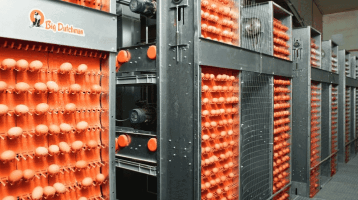 Egg production: Automatic collection systems provide everything necessary safe egg transport.