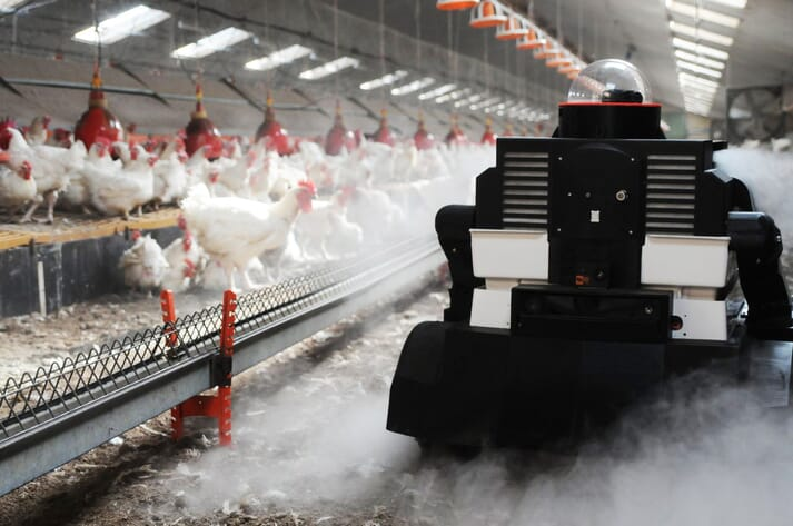 a robot in a chicken shed
