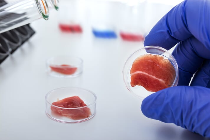 small pieces of meat in a petri dish