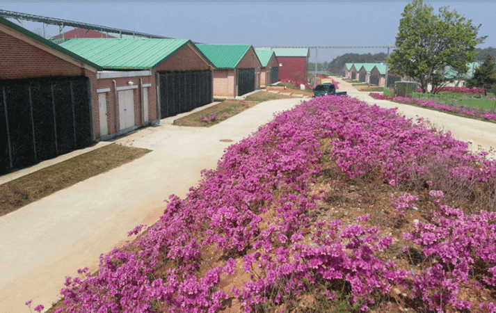 A farm that also pleases the eye: sow facility with 16 MagixX exhaust air washers in South Korea.