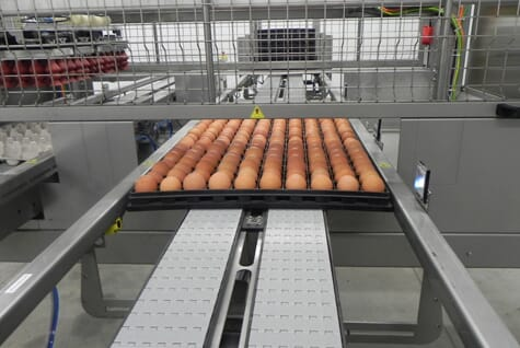 "Vencomatic´s Prinzen ""Setter Line"" system automatically takes the flats of hatching eggs from the breeder farm, transfers the eggs into the setter trays and then fills the trolleys"