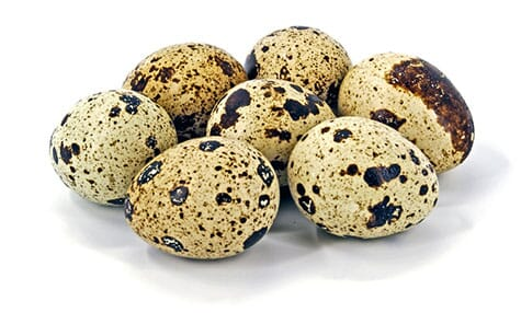 Quail eggs have well differentiated characteristics