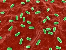 use of probiotics in poultry diets