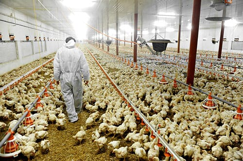 Five Steps to Making Biosecurity Work on Your Farm   The