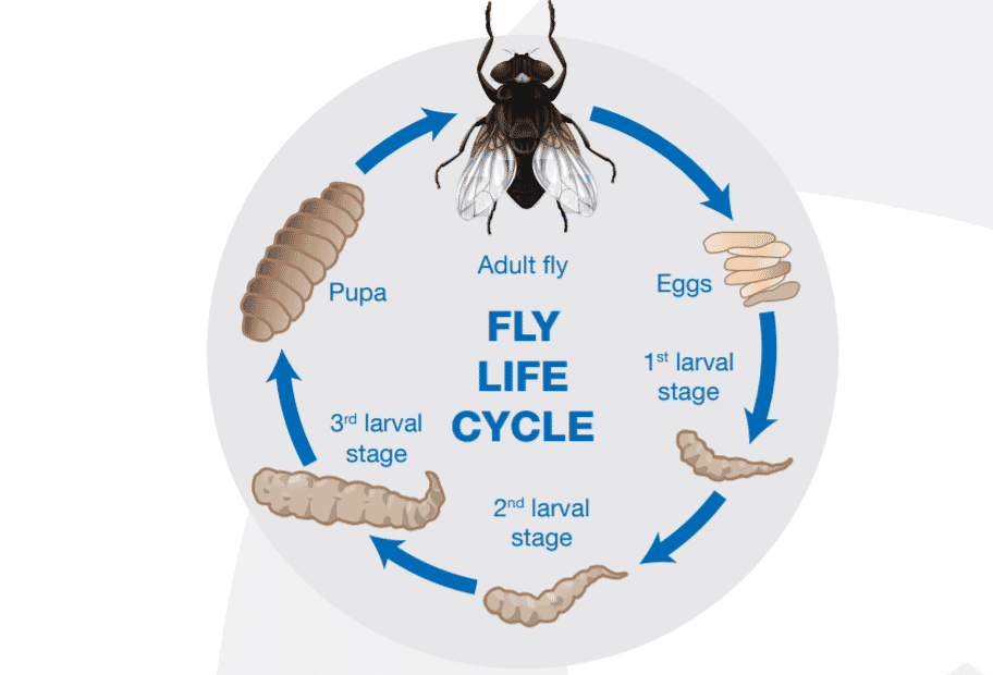 Best Practice On The Farm Fly Control