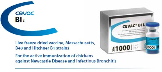 CEVAC® BI L - For the active immunization of Chickens against Newcastle Disease and Infectious Bronchitis from CEVA SANTE ANIMALE