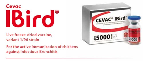 CEVAC® IBird: Live freeze-dried vaccine, variant 1/96 strain. For the active immunization of chickens against Infectious Bronchitis