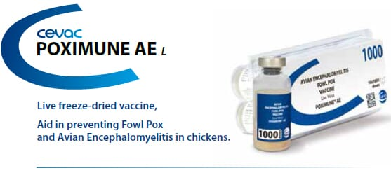 POXIMUNE® AE - Aid in preventing Fowl Pox and Avian Encephalomyelitis in chicken from CEVA SANTE ANIMALE