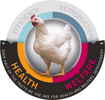 R&D Focus for Healthy Birds - Cobb