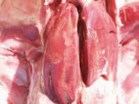 In a septicaemic staphylococcal infection, hyperaemia, enlargement and various-degree coagulation necroses in the liver or the spleen are observed. As staphylococci are ubiquitous, their presence could not be prevented. The measures should be directed toward minimizing the possibilities for traumas of skin, respiratory and intestinal mucosa.