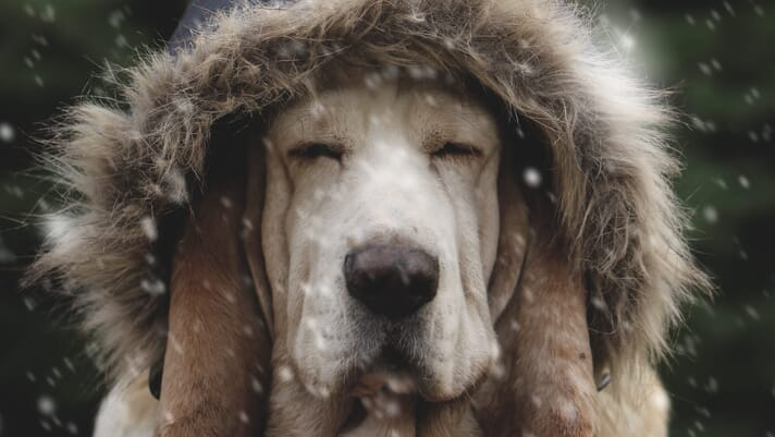 Let's protect our golden oldies this winter! thumbnail image