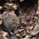 """Would you be interested in investigating whether bank voles near the nuclear reactor in Chernobyl have cataracts?"" thumbnail image"