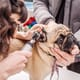 Making noise about brachycephaly thumbnail image