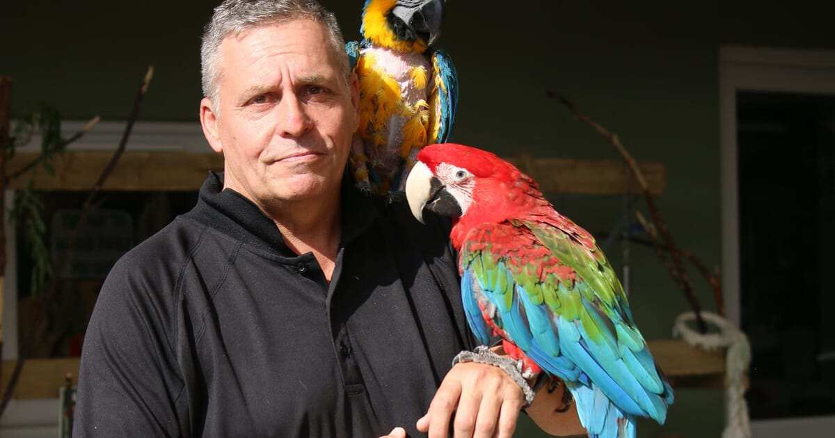 A new direction for parrot conservation | Veterinary Practice