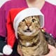 """""""The only thing worse than working over Christmas is having to sort out the rota"""" thumbnail image"""