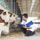 """Gentle care is as important for students as it is for cows""  thumbnail image"