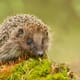 A spring in the step for wild animals thumbnail image