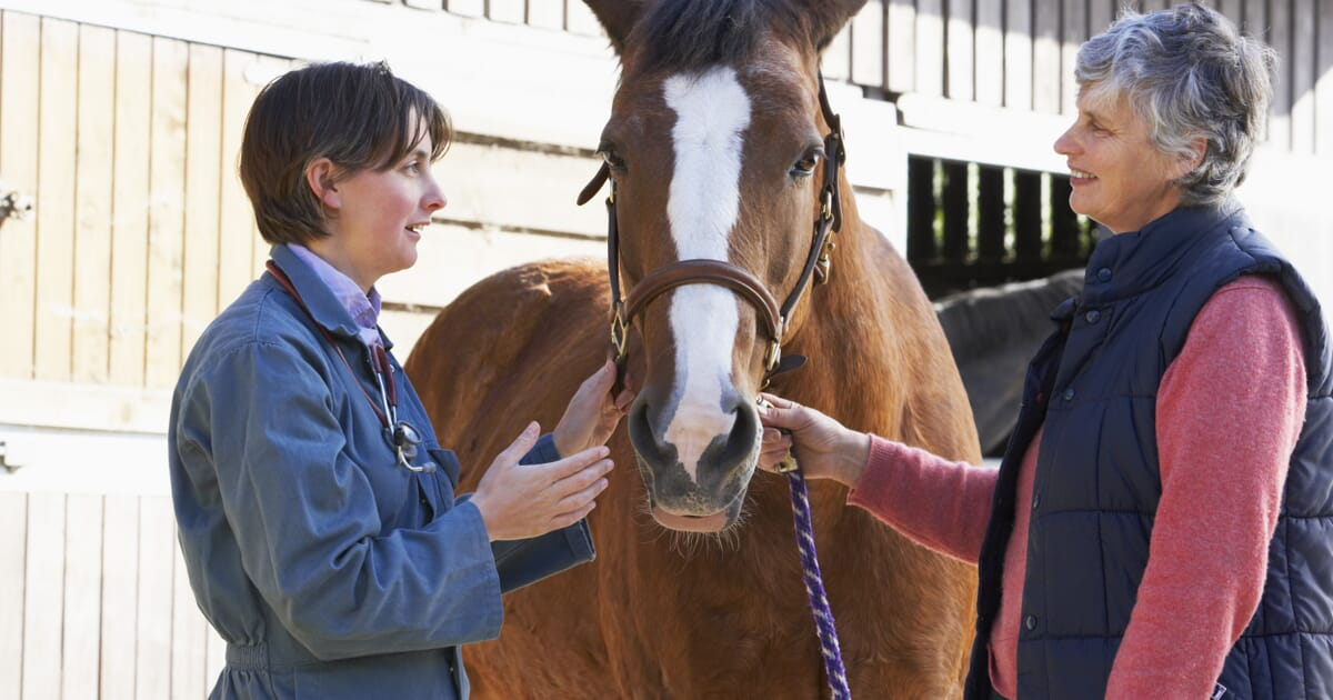 Straight into the horse's mouth | Veterinary Practice