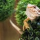 How the exotic pet business has changed from ancient times – and it's not good news! thumbnail image