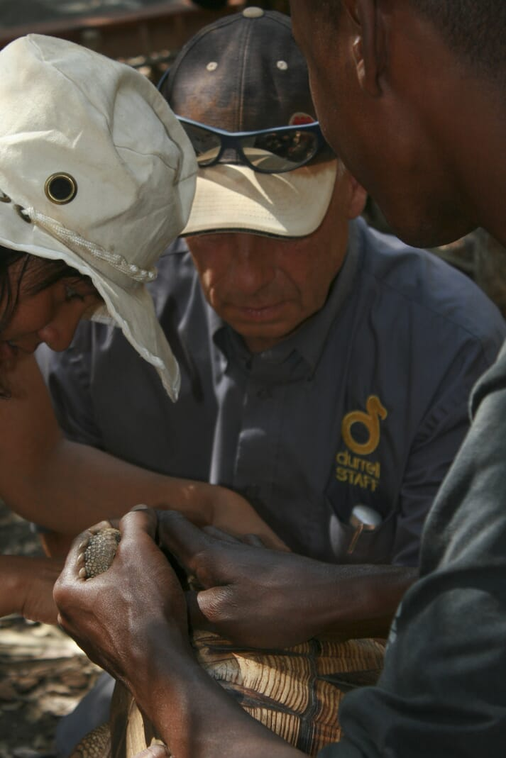Andrew Routh and the Madagascar team bloodsampling a ploughshare tortoise