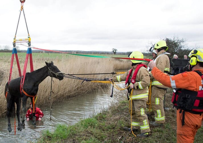 The rescue of a horse called Finnigan from a dyke
