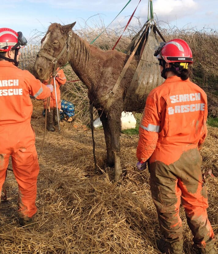 A horse almost back to normality after a rather muddy experience