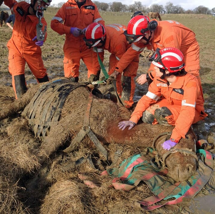 Tender loving care is required after a difficult muddy rescue