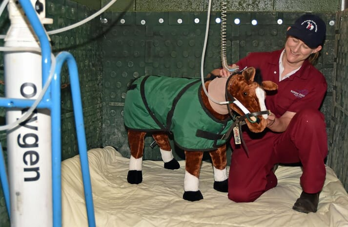 "FIGURE 3 Paula Broadhurst, one of the practice directors, explained the use of the intensive care foal ""Maverick"""